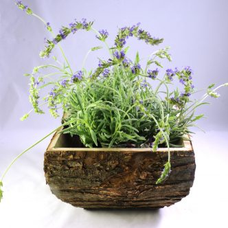 wood-log-planter-001-01