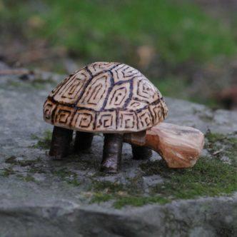 turtle01-c